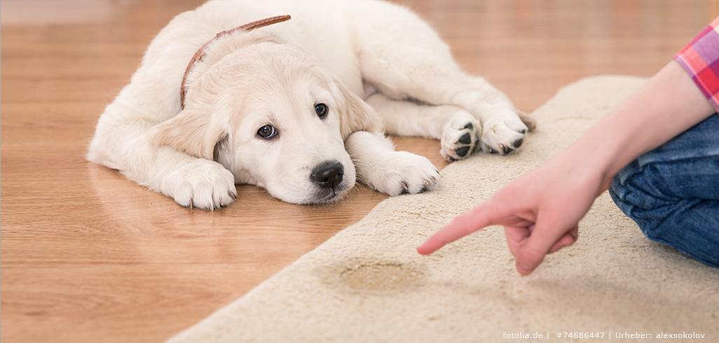 Tierurin auf dem Teppich